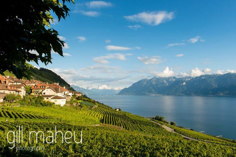 view over vineyards towards Lac Leman at St Saphorin, Lake Geneva wedding by Gill Maheu Photography, photographe de mariage