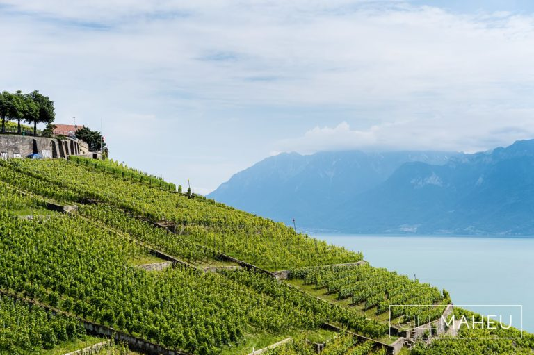 view of vioneyards and lac léman at at blue sky summer wedding Lutry, Lausanne wedding by Gill Maheu Photography, photographe de mariage
