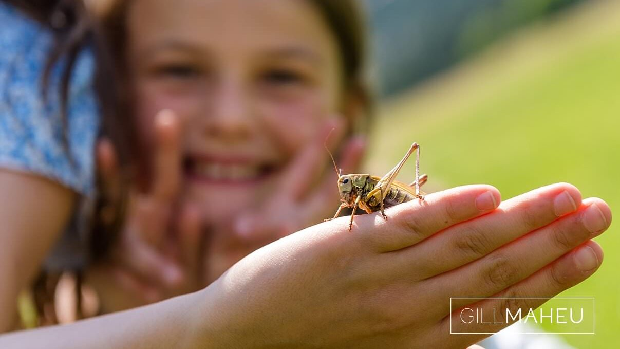 close up of daughters holding grasshopper in summer sun lifestyle photography session in Gimmelwald a mountain village near Bern, Switzerland by Lifestyle photographer Gill Maheu Photography, photographe de famille